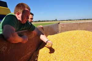 Wysoki eksport zbóż