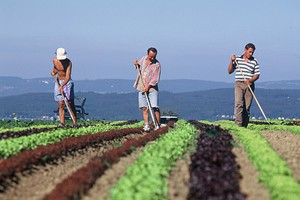 Większa ochrona pracowników sezonowych w UE