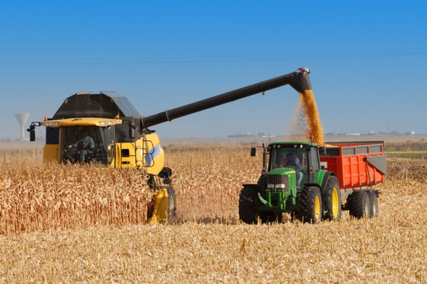 Wysokie zbiory kukurydzy na Ukrainie