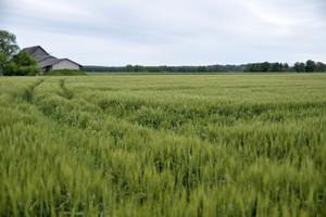 Szmulewicz: Małe gospodarstwa potrzebują pieniędzy na rozwój