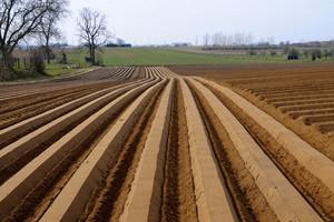 Różne nastroje rolników w Europie, Niemcy i Polacy na tak