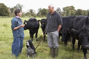 UE: Mniej pieniędzy na zwalczanie chorób zwierząt