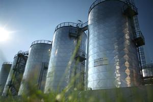Rekordowa produkcja rzepaku i biopaliw