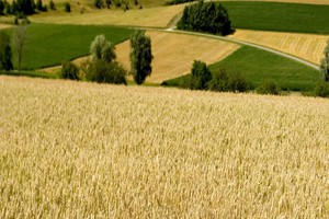 Zazielenienie: Dywersyfikacja upraw w nowej WPR