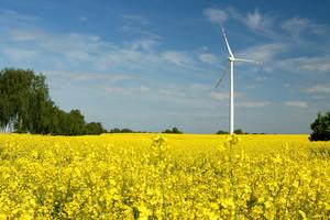 PGE, Bioagra i inni rezygnują z biomasy i biogazu