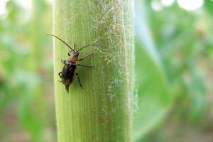 Obowiązuje integrowana ochrona roślin