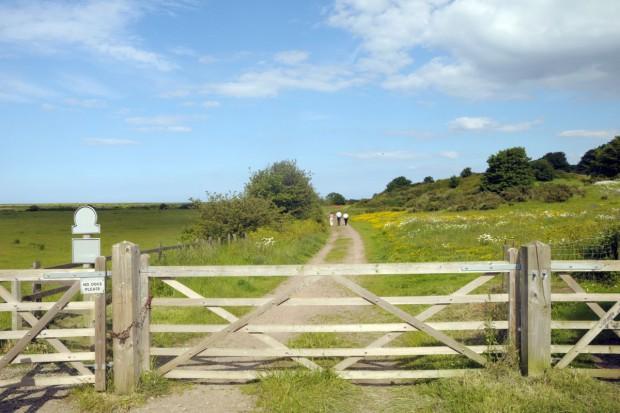 Zazielenienie: Utrzymanie obszaru proekologicznego