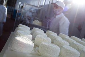 Wysoka cena mleka zniechęca do ekologii
