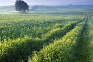 Szalone ceny ziemi