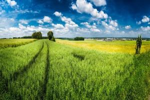 Ziemia rolnicza powinna trafiać do tych, którzy się nią zajmują
