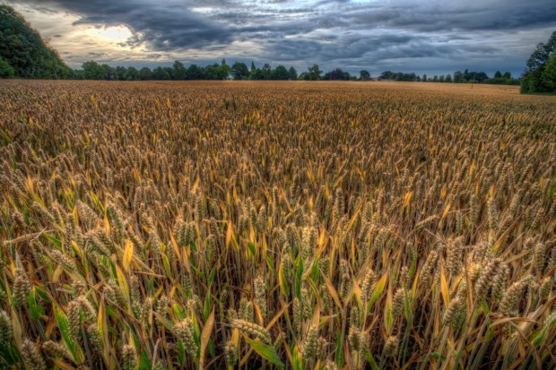 Trudny rok dla producentów surowców rolnych