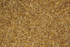 Notowania zbóż na Matif