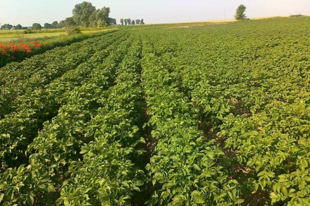Avatar 293 ZC - nowy herbicyd do stosowania w ziemniakach