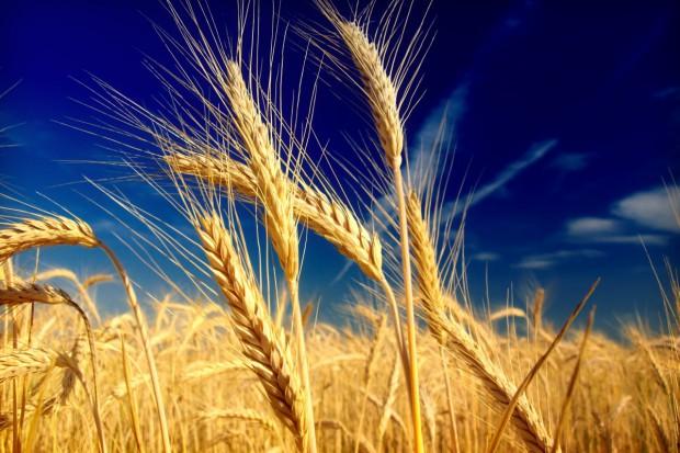 Zmienne notowania surowców rolnych