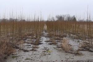 Dwa tysiące ton biomasy dla PGNiG Termika