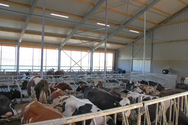 Oświetlenie w budynkach dla krów mlecznych