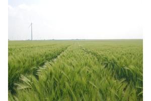 Unikatowy fungicyd dedykowany wyłącznie do jęczmienia