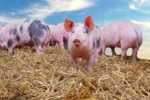 Rosja grozi rozszerzeniem embarga na zakłady mięsne UE