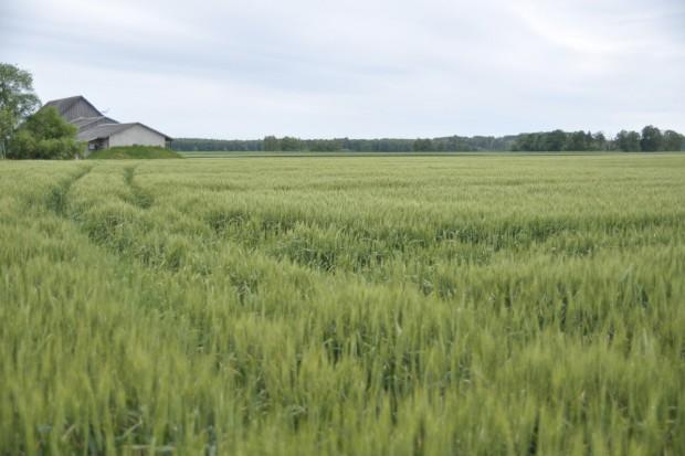 Na Litwie referendum w sprawie sprzedaży ziemi obcokrajowcom