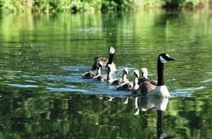 Ptaki wskaźnikiem ekologicznej wartości terenów rolniczych