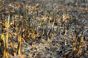 W tym roku 40 tys. pożarów traw