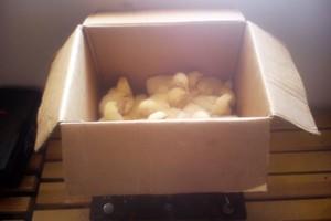 Ile waży twój kurczak?