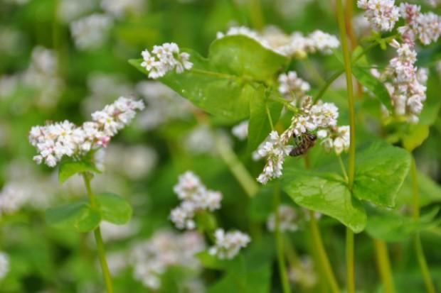 Greenpeace: pszczele produkty nie są wolne od pestycydów