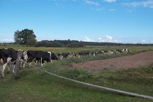 Pastuch dla bydła jaki wybrać ?