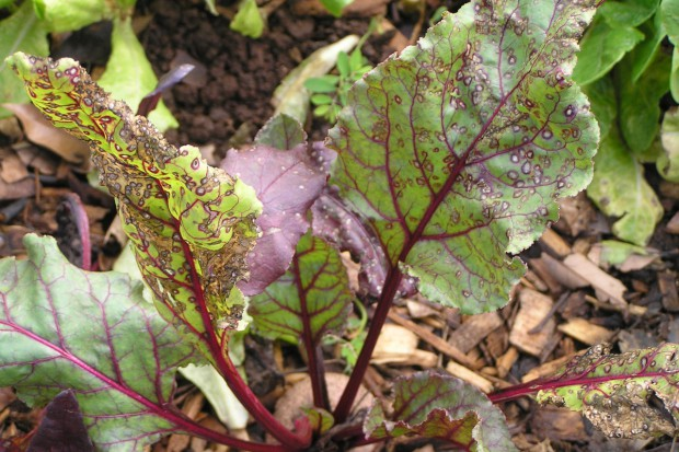 Choroby grzybowe roślin - jak zapobiegać ich występowaniu