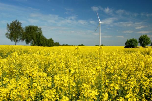 W tym roku niższe ceny skupu zbóż i rzepaku