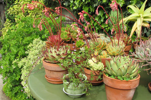 Proste sposoby nawadniania roślin podczas urlopu