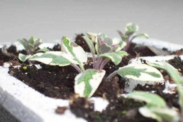 Rozmnażamy byliny kwitnące wiosną