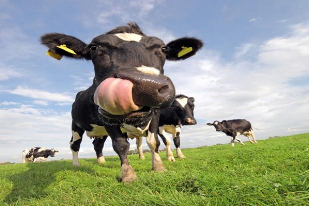 Sawicki: rolnicy będą mogli sprzedawać własne wyroby mięsne