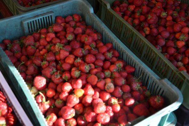Bronisze: owoce i warzywa tańsze niż przed rokiem