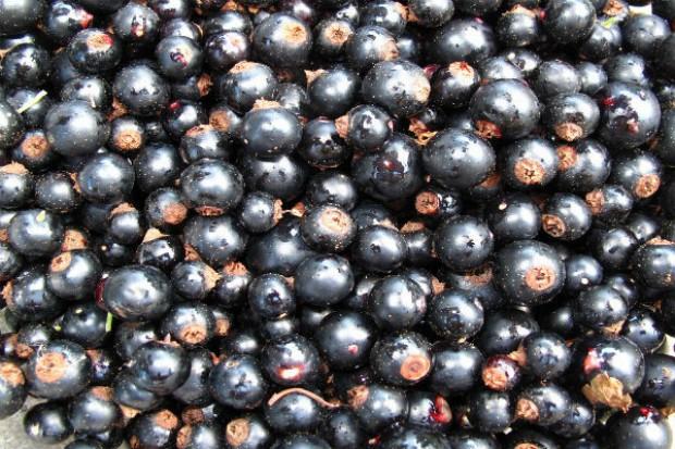 Niskie ceny skupu owoców miękkich