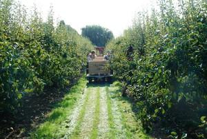 Minister rolnictwa ma propozycje dla niezadowolonych sadowników