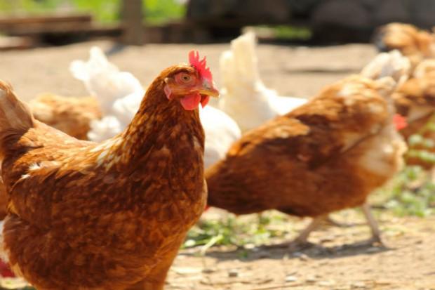 Oskarżony o oszustwa przy sprzedaży jajek w proszku