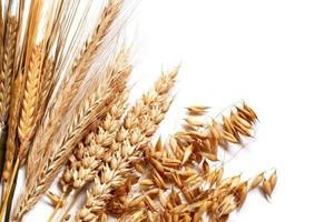 Rzepak podrożał, zboża bez zmian - niższa zawartość białka