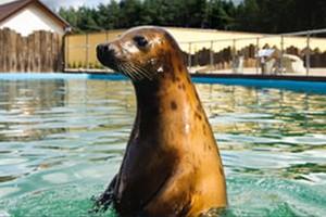 Park morski – sukces rodzinny
