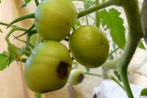 Nieinfekcyjne choroby warzyw w okresie letnim