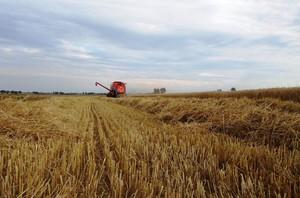Wstępny raport GUS dotyczący wielkości produkcji rolnej i ogrodniczej w 2014r.