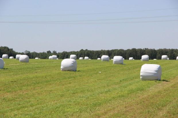 Uchronić pokos przed deszczem – szybki zbiór traw