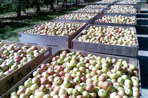 Sawicki: w piątek spotkanie zespołu ws. promocji eksportu płodów rolnych