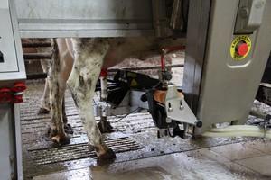 Nawet proste badanie mleka może pomóc w walce z mastitis