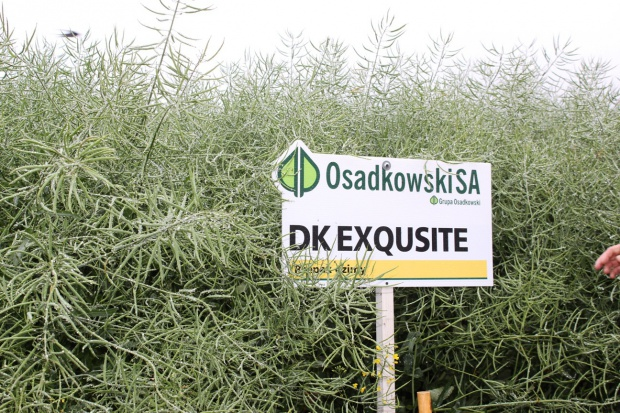 Wyniki plonowania odmian rzepaku ozimego od Monsanto
