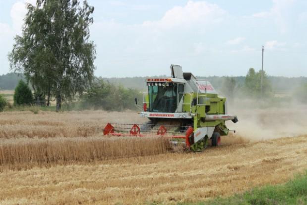 Kończą się żniwa, plony zbóż są wysokie