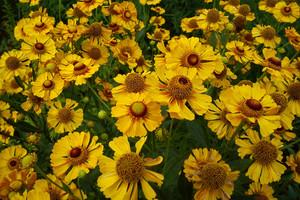 Dzielżany – zapomniane byliny