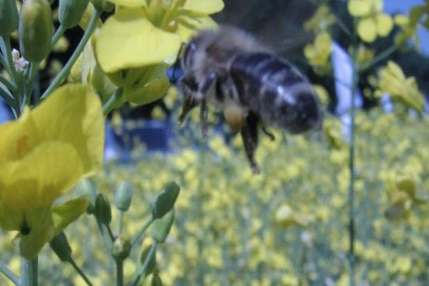 Siedliska z pożywieniem dla pszczół