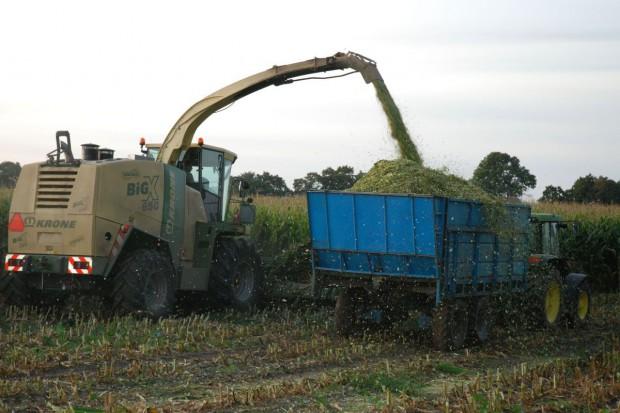 Czas na kiszonkę z kukurydzy