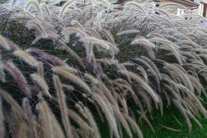 Ozdobne trawy – modne byliny